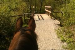 Cattell Bridge on Tim's Trail