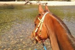 Horsemans Beach at Gold Creek