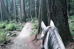 On Pauline Clark Trail