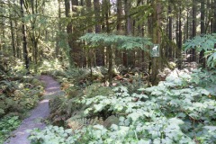 """Upper George's Way (this segment now called """"Ridge Riders Trail"""")"""