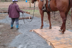 Guiding horse in-hand through the obstacles
