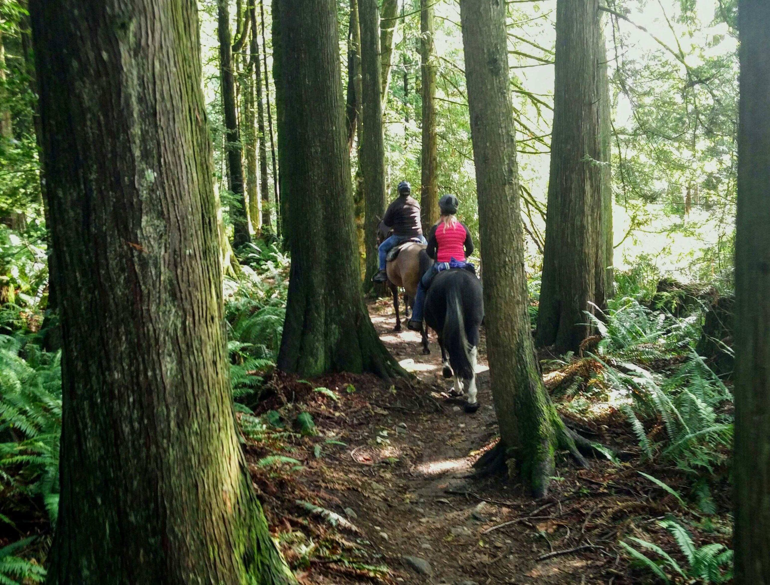 Quiet horseback ride on Bear Ridge Trail in Thornhill