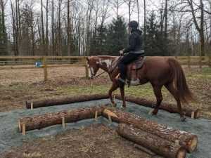 Horseman's Park Trail Obstacle - Elbow