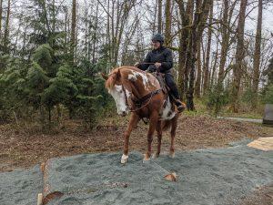 Horseman's Park Trail Obstacle - Platform