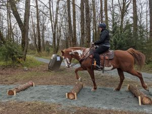 Horseman's Park Trail Obstacle - Stepovers